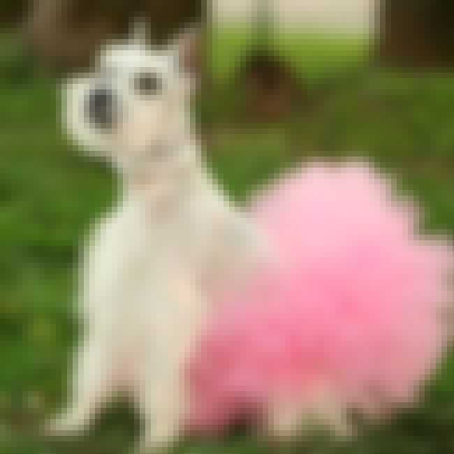 Dog Tutu is listed (or ranked) 1 on the list The Cutest Dog Accessories on the Internet