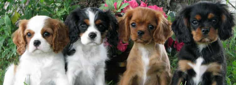 Very Cute Puppy Dogs
