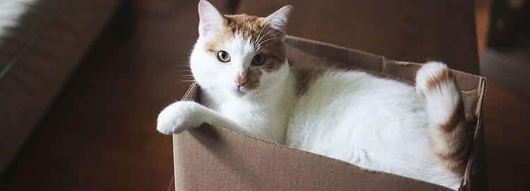 Just Kitty Cat Stuff