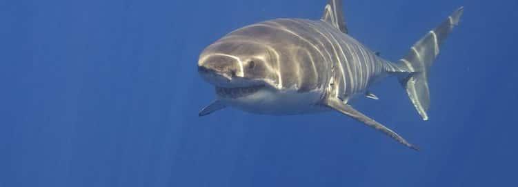 Every Week Is Shark Week