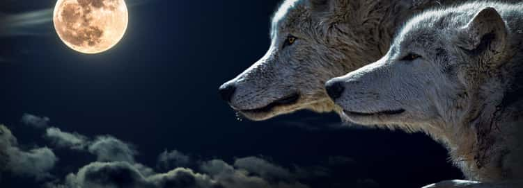 Men Becoming Wolves