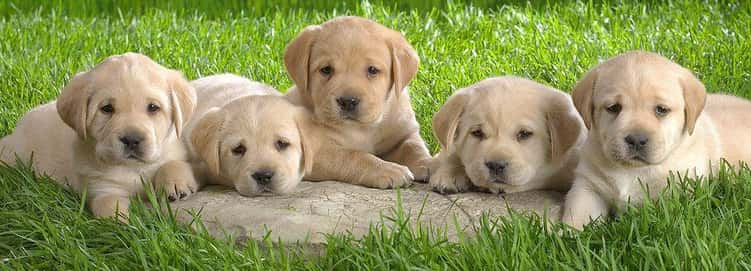 OMG, Puppies!