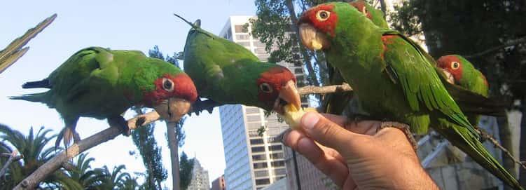 Avian Aficionados