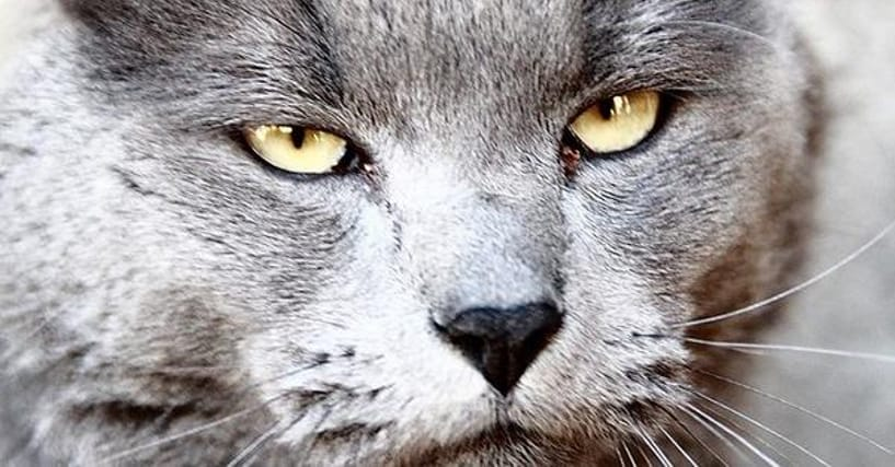 9 Terrifying Stories Of House Cats Killing People