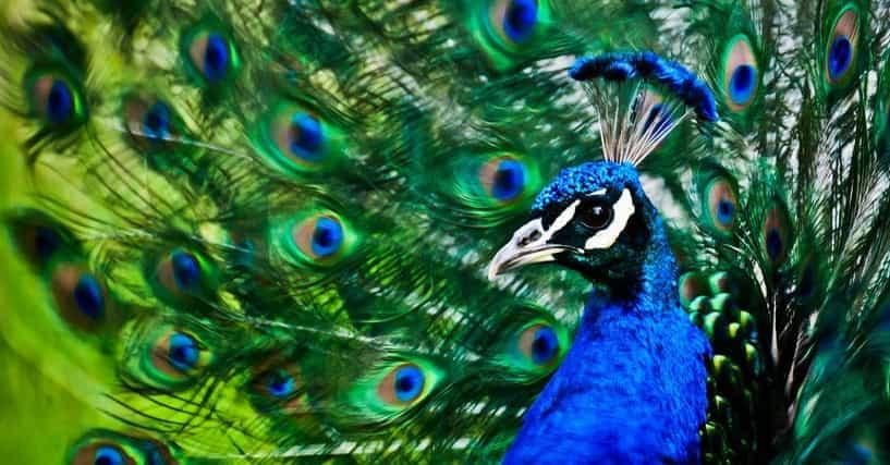 The World's Most Beautiful Animals