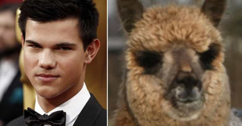 Celebrities Who Have Animal Doppëlgangers on the Internet ...