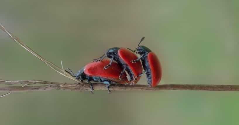 Insect Sex 54