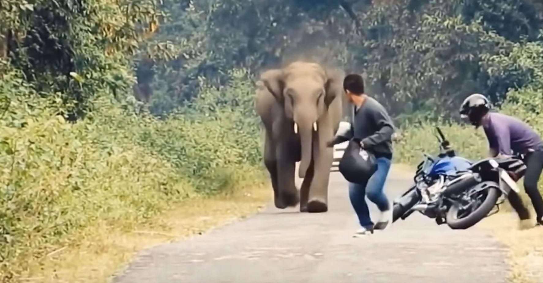 People Who Survived Wild Animal Attacks Tell Their Stories