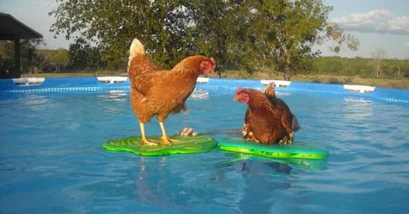 25 Funny Swimming Pool Pictures Just In Time For Summer