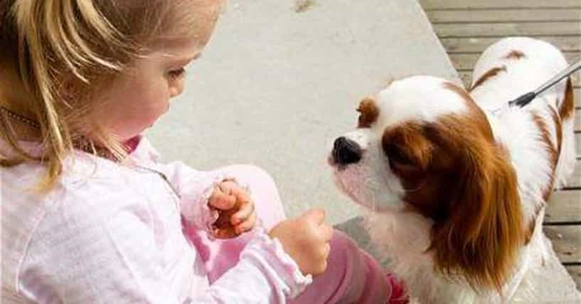 10 Most Dangerous Dog Breeds