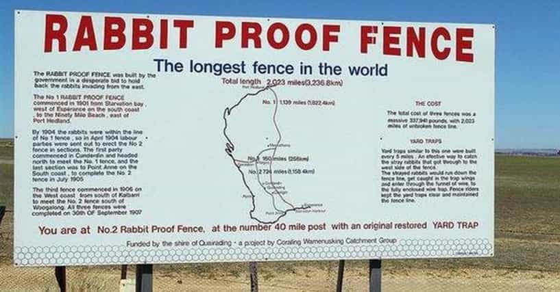 essay on rabbit proof fence importance of family
