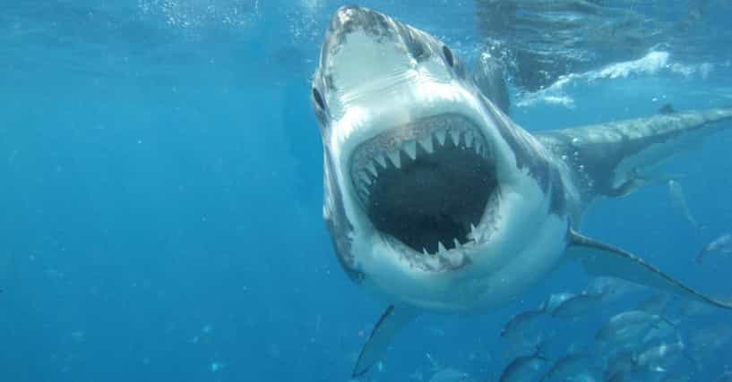The Scariest Animals in the World