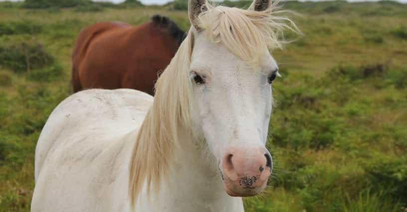 Q Horse Names Funny Horse Names | Li...