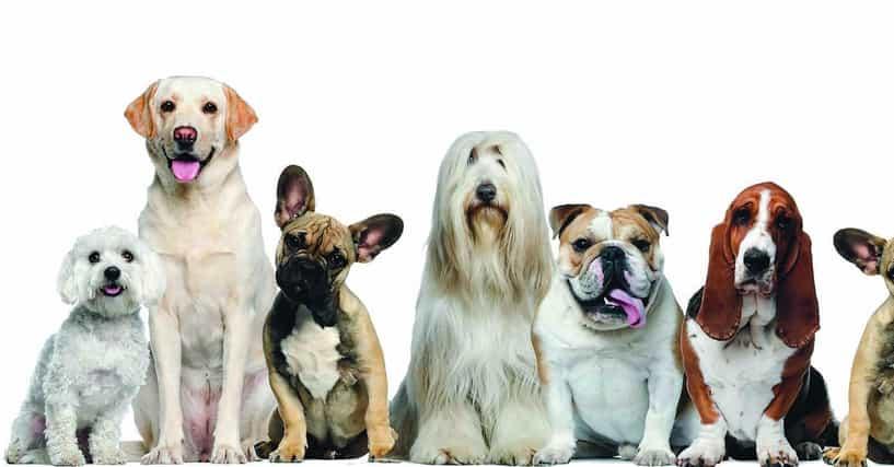 Good Dog Breeds For Families Uk