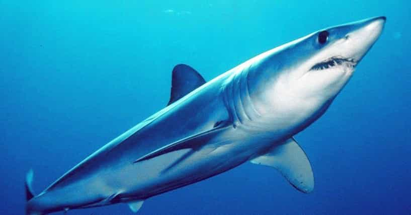 14 Beyond Fascinating Facts About Sharks That Most People Don't Know