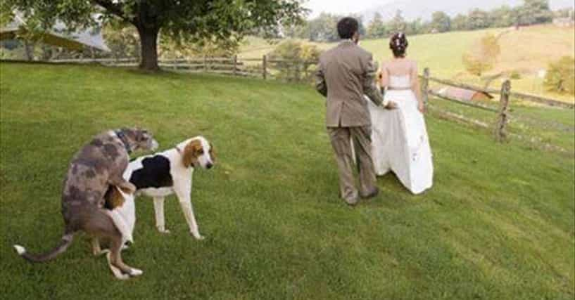 Funny Wedding Pictures Bad Wedding Day Photos