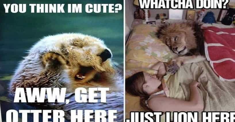 25 Funny Animal Pun Memes You Can't Help But Laugh At