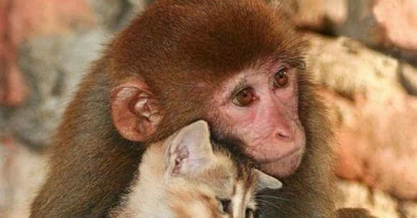 Photos Of Animals Working Together