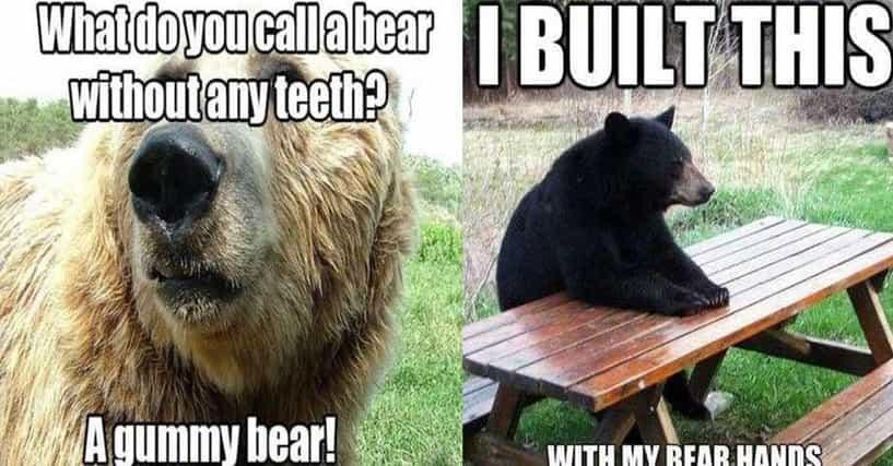 Bear Puns | Funny Bear Memes