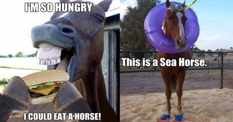 horse puns 17 funny horse memes that ll make you neigh