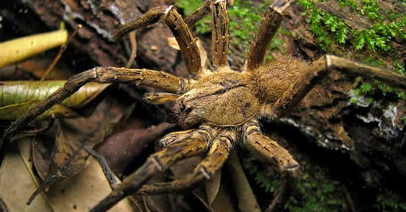 13 Disturbing Spider Facts That Will Make You More Scared ...