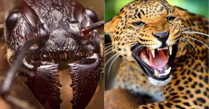 intimidating animals list Animals already have that wisdom ensconced firmly in their survival rules list a furious cat can be intimidating enough that its.
