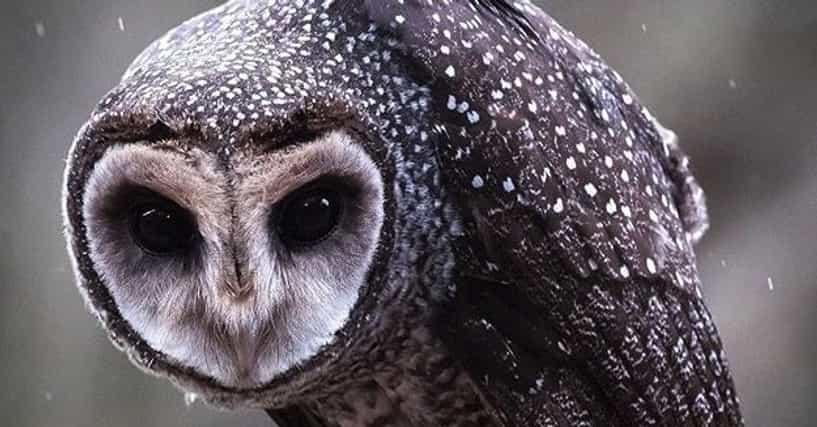 25 Surprisingly Scary Pictures of Owls