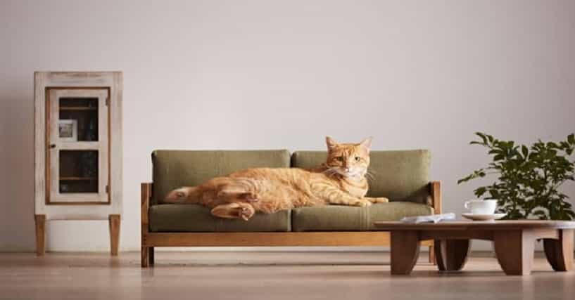 This Japanese Luxury Furniture Is For Your Cat And You 39 Re