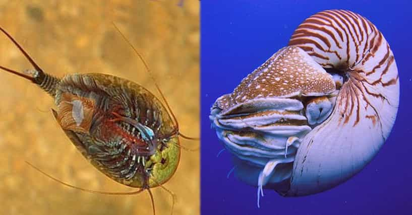 an overview of living things on earth Competency 046: structure and function of structure and function of living things bioed online provides an overview of how living organisms are.
