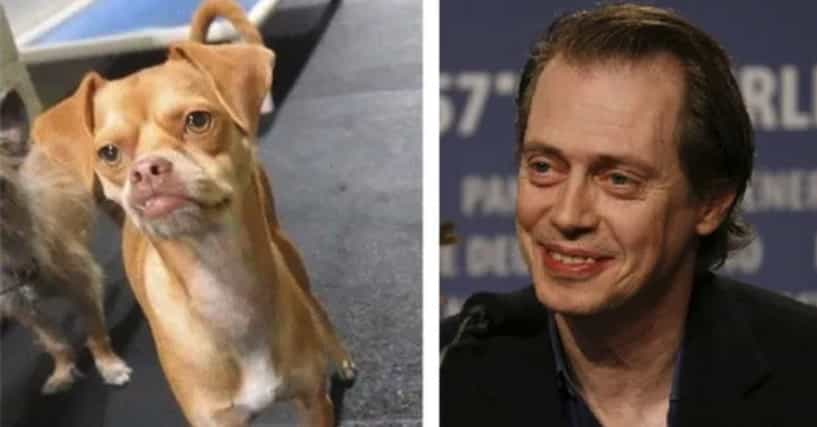 These 11 Animals Look So Much Like Celebrities You Will ...