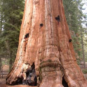 Sequoia National Park is listed (or ranked) 16 on the list The Best Tourist Attractions in America