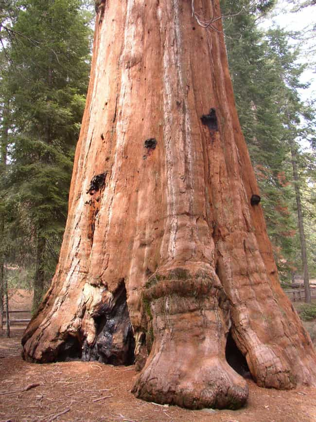 Sequoia National Park is listed (or ranked) 4 on the list America's Best Family Getaways