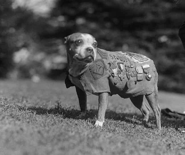 Sergeant Stubby is listed (or ranked) 1 on the list 13 Heroic Military Animals You Had No Idea Existed