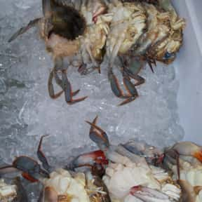 Soft-shell crab is listed (or ranked) 13 on the list The Best Fish for Sushi