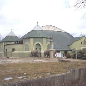 Hellabrunn Zoo is listed (or ranked) 14 on the list The Top Must-See Attractions in Munich