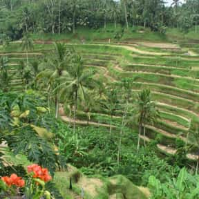Ubud is listed (or ranked) 21 on the list The Best Asian Cities to Visit
