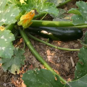 Zucchini is listed (or ranked) 14 on the list The Best Food Pairings For Chardonnay, Ranked