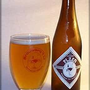 Brouwerij 't IJ Plzen is listed (or ranked) 19 on the list The Top Beers from Netherlands