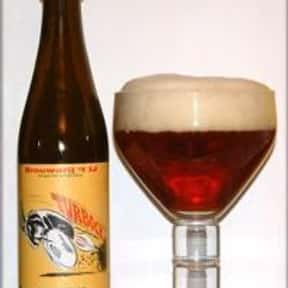 Brouwerij 't IJ Turbock Winter is listed (or ranked) 21 on the list The Top Beers from Netherlands