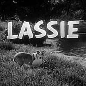 Lassie is listed (or ranked) 13 on the list The Greatest TV Shows of the 1950s