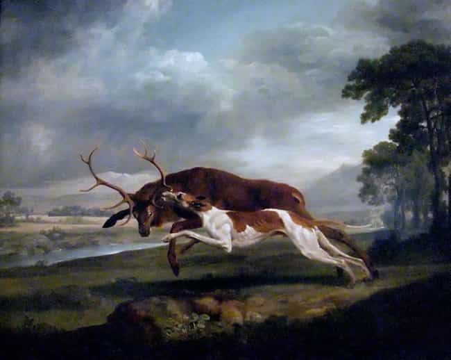 Hound Coursing a Stag is listed (or ranked) 4 on the list Famous George Stubbs Paintings