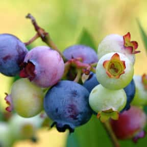 Blueberry is listed (or ranked) 17 on the list Low Fat foods