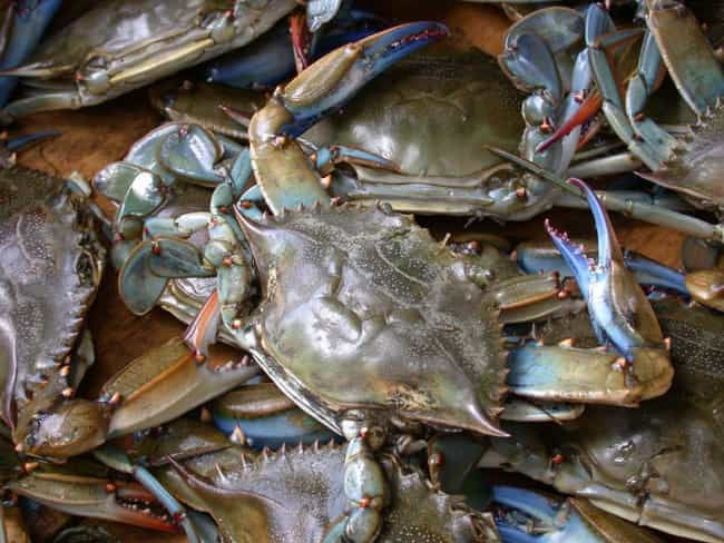 Chesapeake blue crab is listed (or ranked) 4 on the list The Best Kinds of Crab to Eat
