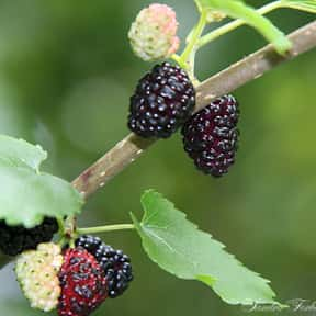 Boysenberry is listed (or ranked) 18 on the list Low Fat foods
