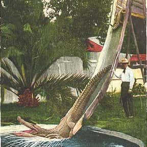 Los Angeles Alligator Farm is listed (or ranked) 19 on the list Amusement Parks in California