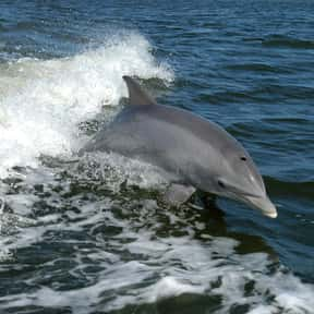 Dolphin is listed (or ranked) 2 on the list What Sea Creature Do You Want to Be?