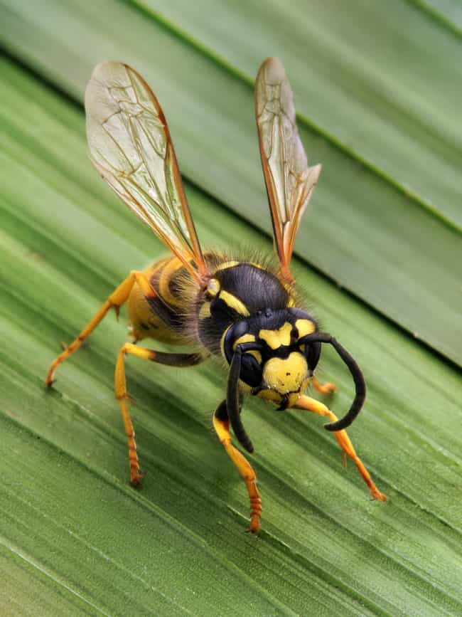Wasp is listed (or ranked) 3 on the list 11 Animals That Use Tools In Insanely Clever Ways