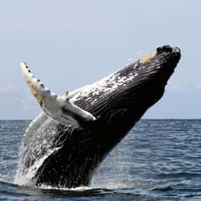 Whale is listed (or ranked) 7 on the list What Sea Creature Do You Want to Be?