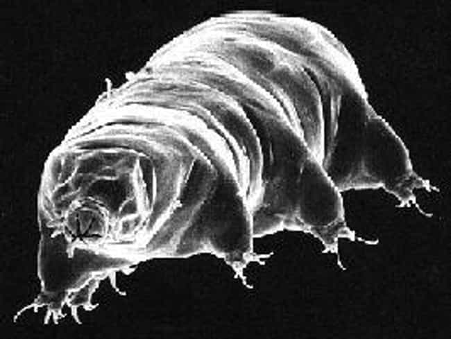 Tardigrade is listed (or ranked) 4 on the list 15 Crazy Animals Of The Polar Regions That Couldn't Exist Anywhere Else