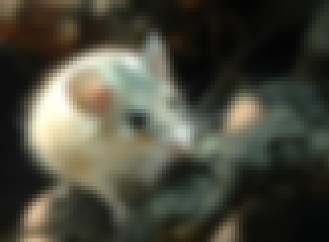 Spiny mouse is listed (or ranked) 3 on the list 25+ Desert Creatures That Have Adapted To Extreme Conditions